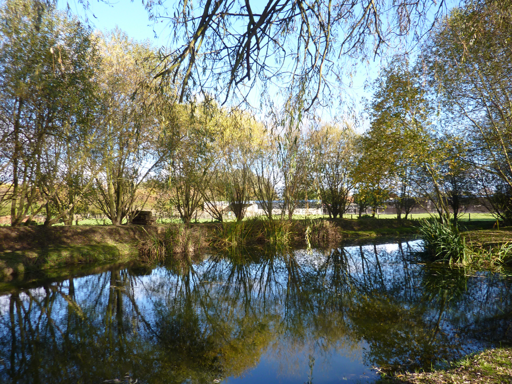Lots of wildlife to see on the ponds at Low Costa Mill, Pickering, North Yorkshire