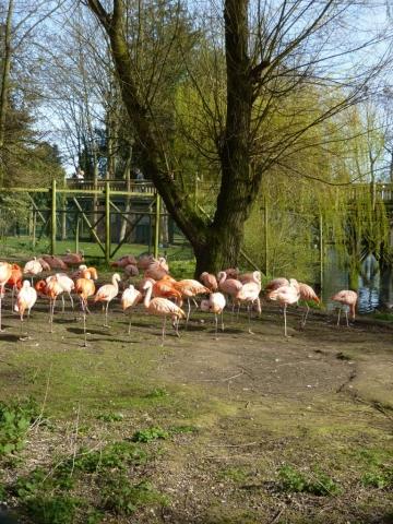 Flamingo Land Zoo and theme park even has Flamingos
