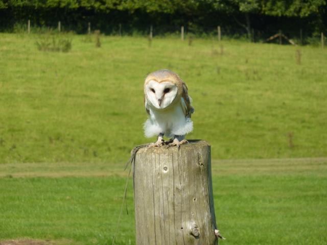 Duncombe Park National Bird of Prey Centre Owl
