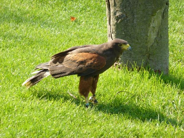National Bird of Prey Centre Duncombe Park