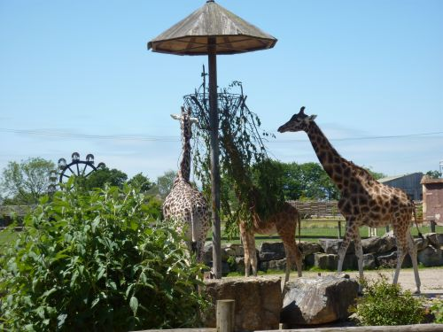 Flamingo Land Theme Park and Zoo - Adventures in North Yorkshire Low Costa Mill